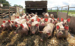 The Pig Idea ensures unwanted food waste is well used