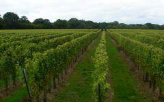 Gusbourne Estate puts sparkling wine on the map in Britain