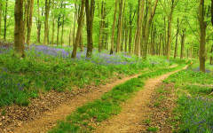 Why it's better to invest in farmland and forestry over London prime property