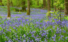 British woodland's role evolves through the ages yet remains a national treasure