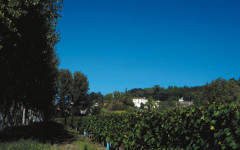 Domaine de Bellevue wine club offers vineyard ownership perks minus dregs