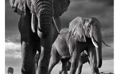 David Yarrow on growing his hedge fund and shooting the animals and people of Africa – as a photographer