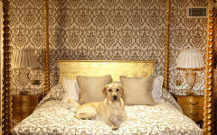 A Dog's Life: West London's Pampered Pooches