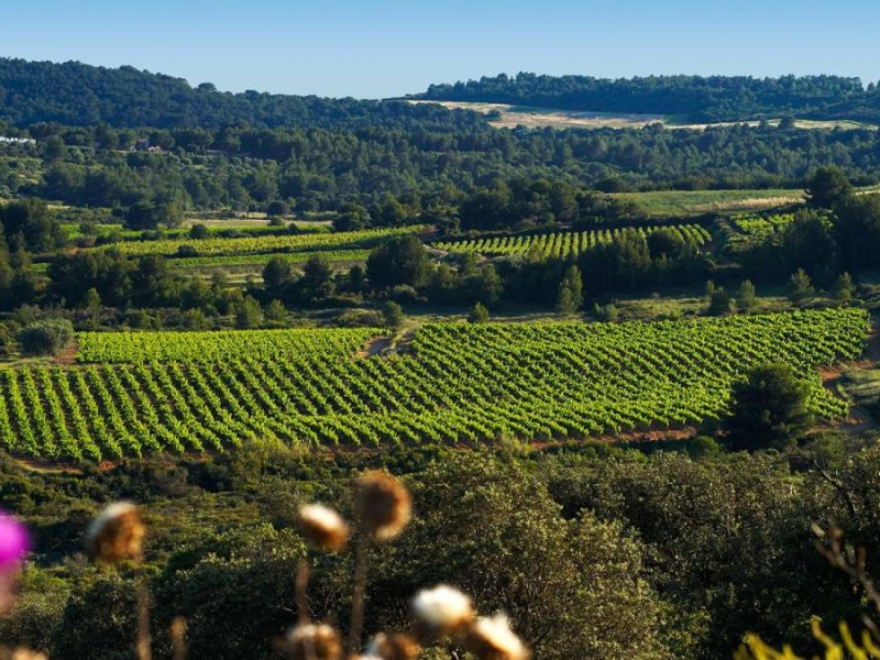 How to buy a vineyard (without the hangover)