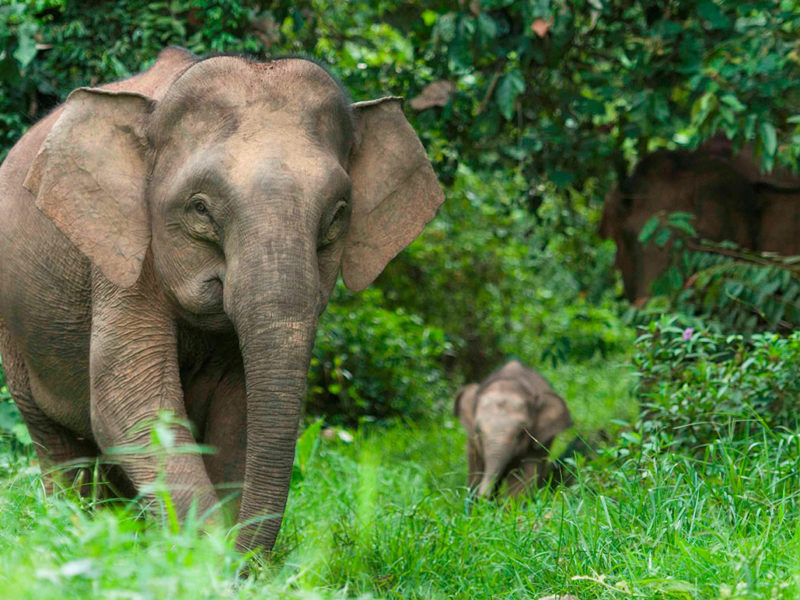 The late Mark Shand's conservation charity is helping communities (and elephants)