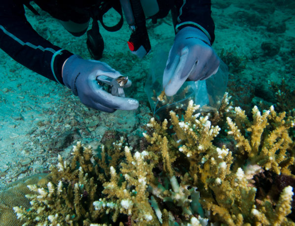 Coral Propagation Project by Pimalai
