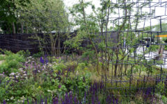 Breaking Ground Garden triumphs at Chelsea Flower Show