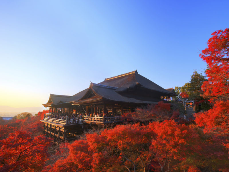 Kyoto travels: discovering the blossoming taste of Japan