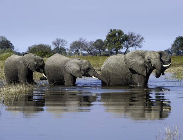 A tale of two camps: a journey through the Okavango Delta