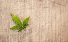 A HNW guide to 'this year's wellness catch-all miracle cure' CBD