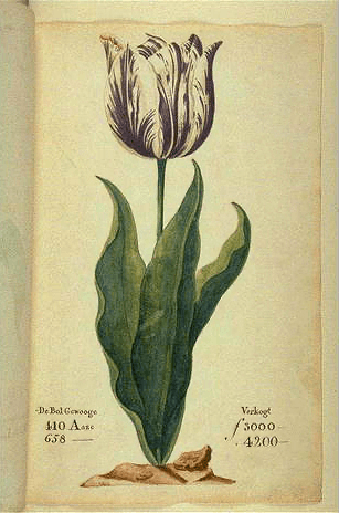 Bitcoin and tulips: the art of mania – Spear's essay