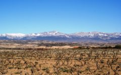 Jonathan Ray on Rioja: 'The quality level has soared recently'