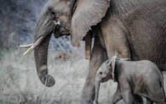 Conservation is not just about preserving wildlife