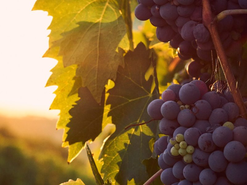 This Silicon Valley vineyard owner says Covid-19 will lead to big changes in wine