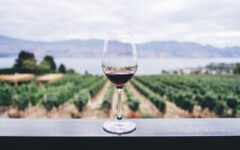 Barolo: An untapped wine investment in northwestern Italy