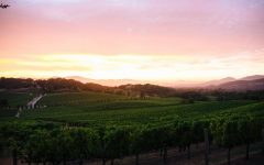 Justerini & Brooks Looks to a New Generation of US Winemakers