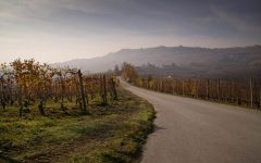 Discover the growers transforming Italian winemaking