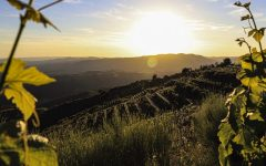 InnovationWith Altitude: Spain's New Generation of Winemakers