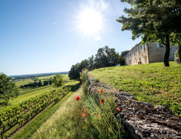 Grape expectations: Château Quintus's truly remarkable wine